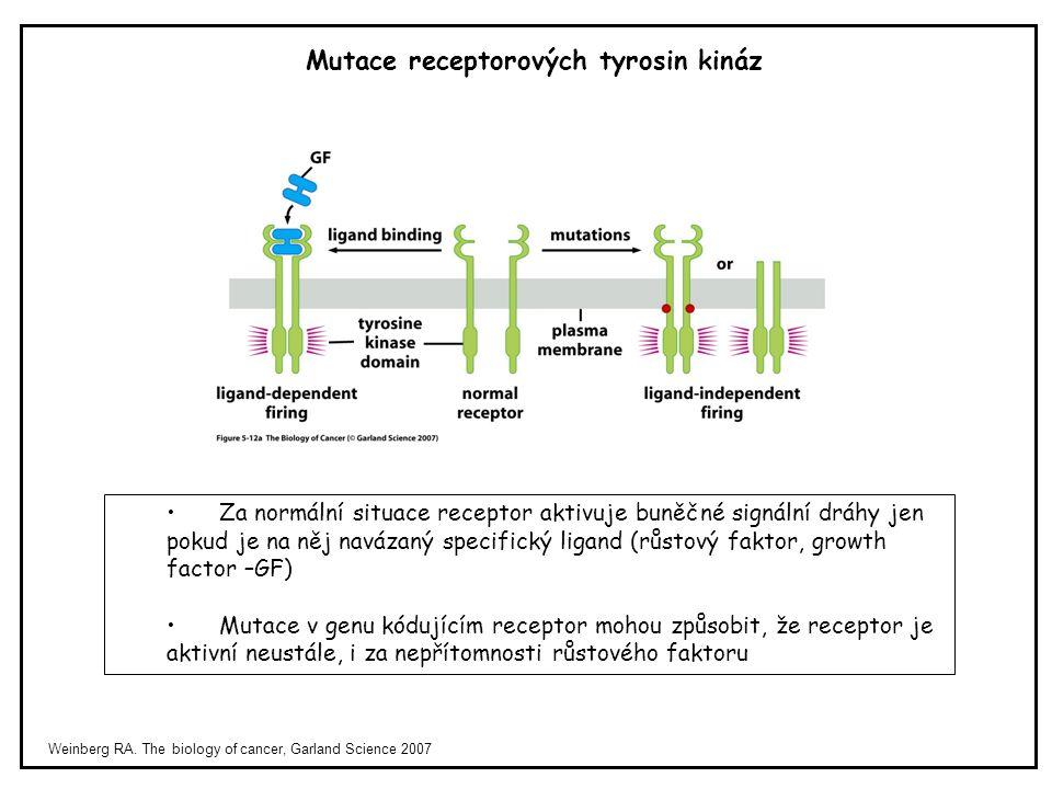 Weinberg RA. The biology of cancer, Garland Science 2007 Za normální situace receptor aktivuje buněčné signální dráhy jen pokud je na něj navázaný spe