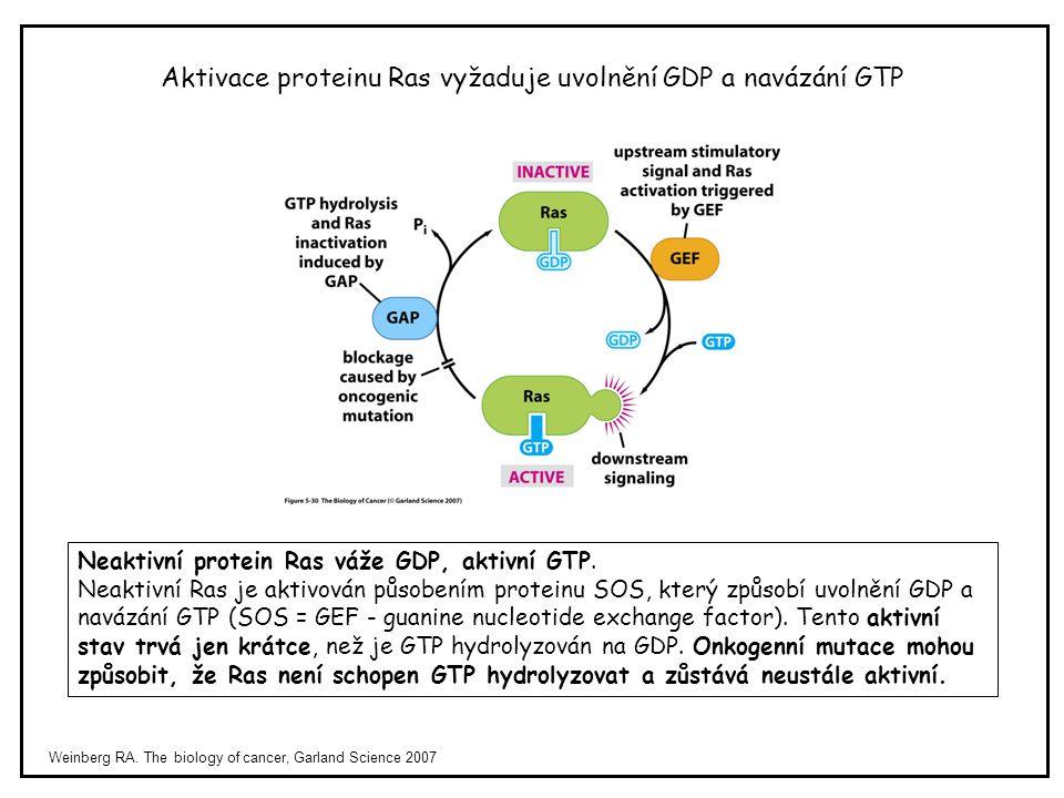 Weinberg RA. The biology of cancer, Garland Science 2007 Aktivace proteinu Ras vyžaduje uvolnění GDP a navázání GTP Neaktivní protein Ras váže GDP, ak