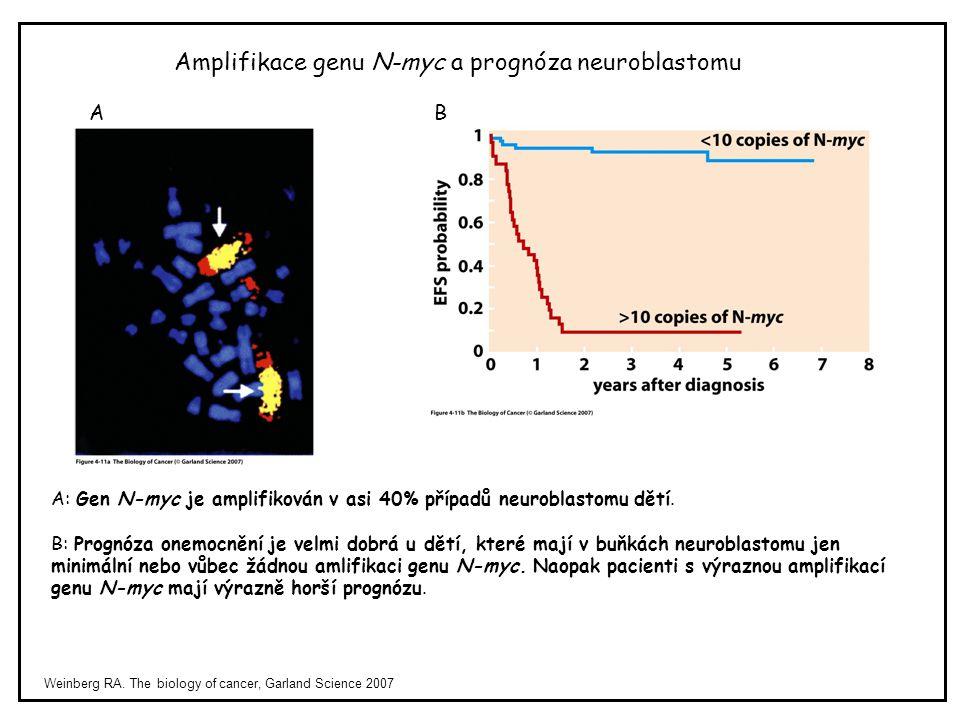 Weinberg RA. The biology of cancer, Garland Science 2007 Amplifikace genu N-myc a prognóza neuroblastomu AB A: Gen N-myc je amplifikován v asi 40% pří