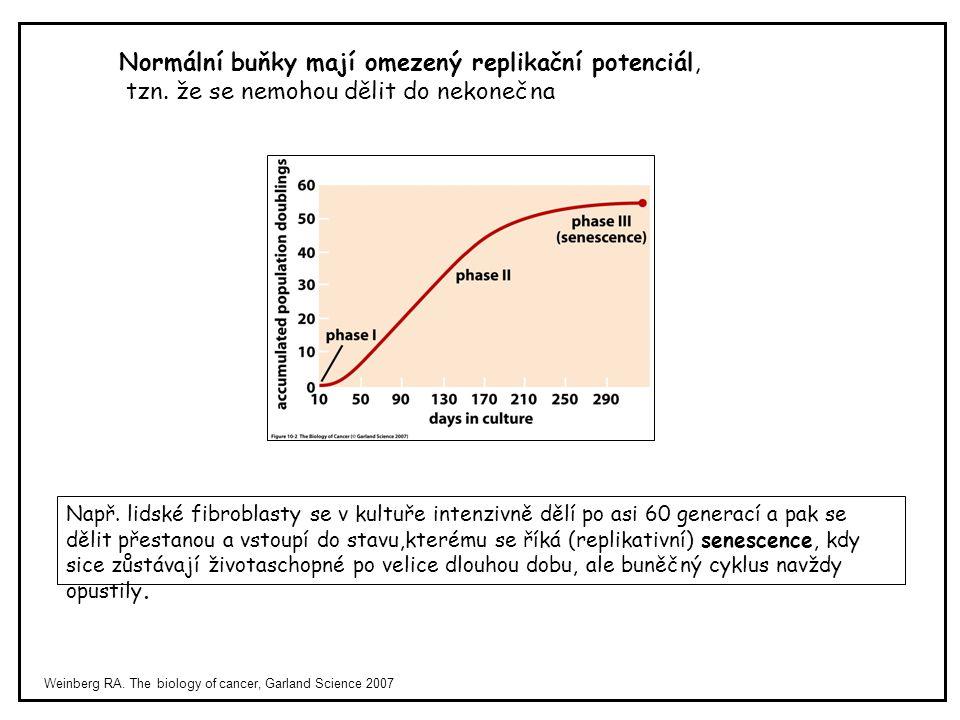 Weinberg RA. The biology of cancer, Garland Science 2007 Normální buňky mají omezený replikační potenciál, tzn. že se nemohou dělit do nekonečna Např.