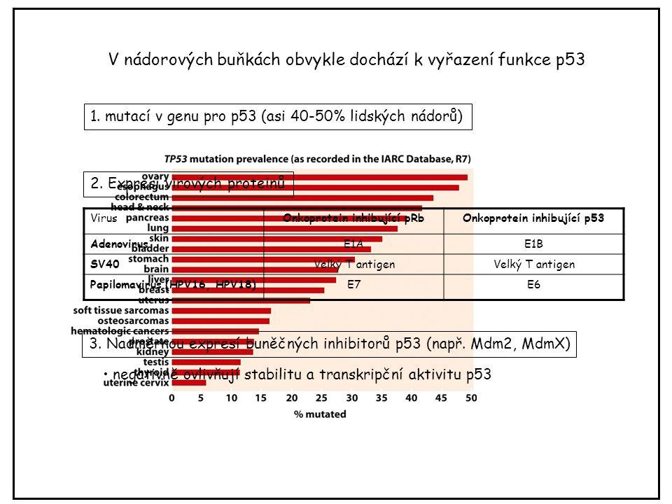 V nádorových buňkách obvykle dochází k vyřazení funkce p53 3. Nadměrnou expresí buněčných inhibitorů p53 (např. Mdm2, MdmX) negativně ovlivňují stabil