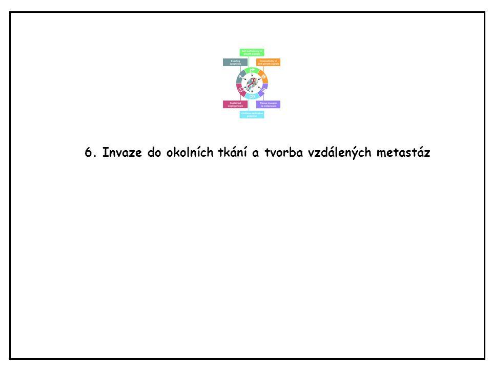 6. Invaze do okolních tkání a tvorba vzdálených metastáz