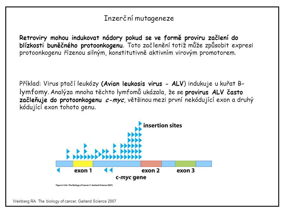 Weinberg RA. The biology of cancer, Garland Science 2007 Inzerční mutageneze Retroviry mohou indukovat nádory pokud se ve formě proviru začlení do blí
