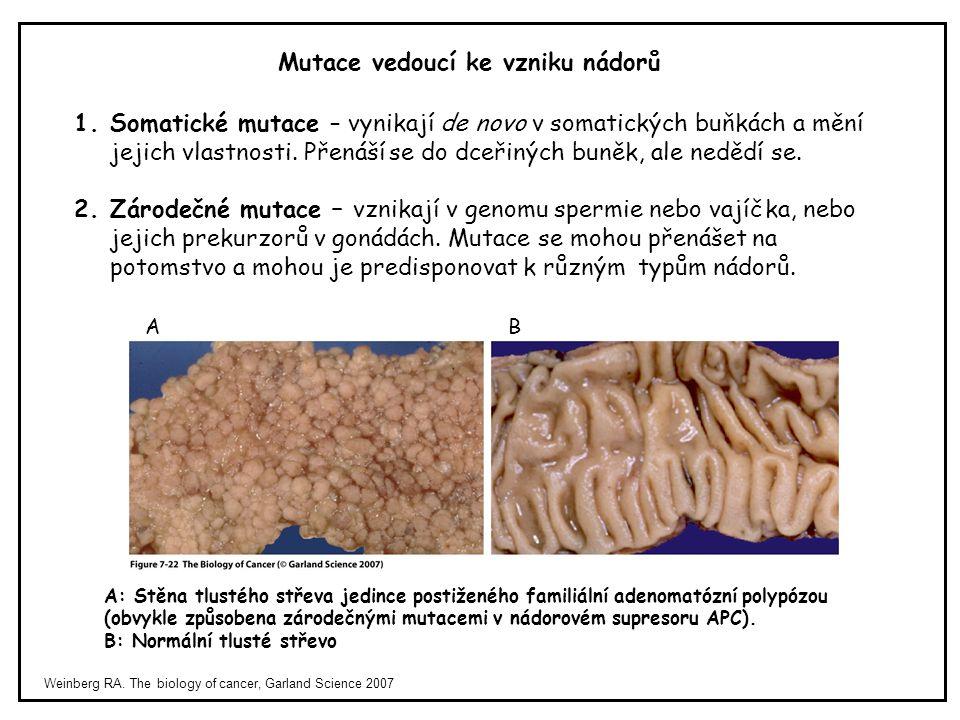 Mutace vedoucí ke vzniku nádorů Weinberg RA. The biology of cancer, Garland Science 2007 1.Somatické mutace – vynikají de novo v somatických buňkách a