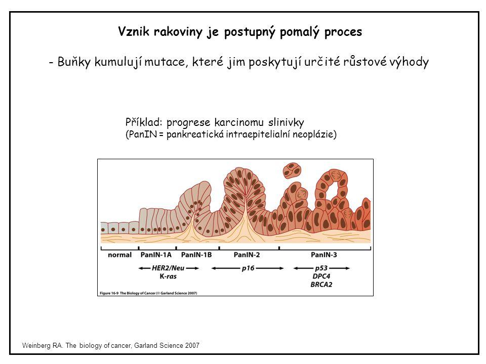 Weinberg RA. The biology of cancer, Garland Science 2007 Vznik rakoviny je postupný pomalý proces Příklad: progrese karcinomu slinivky (PanIN = pankre