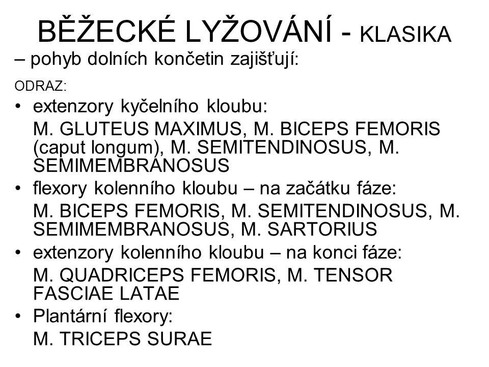 BĚŽECKÉ LYŽOVÁNÍ - KLASIKA – pohyb dolních končetin zajišťují : ODRAZ: extenzory kyčelního kloubu: M. GLUTEUS MAXIMUS, M. BICEPS FEMORIS (caput longum