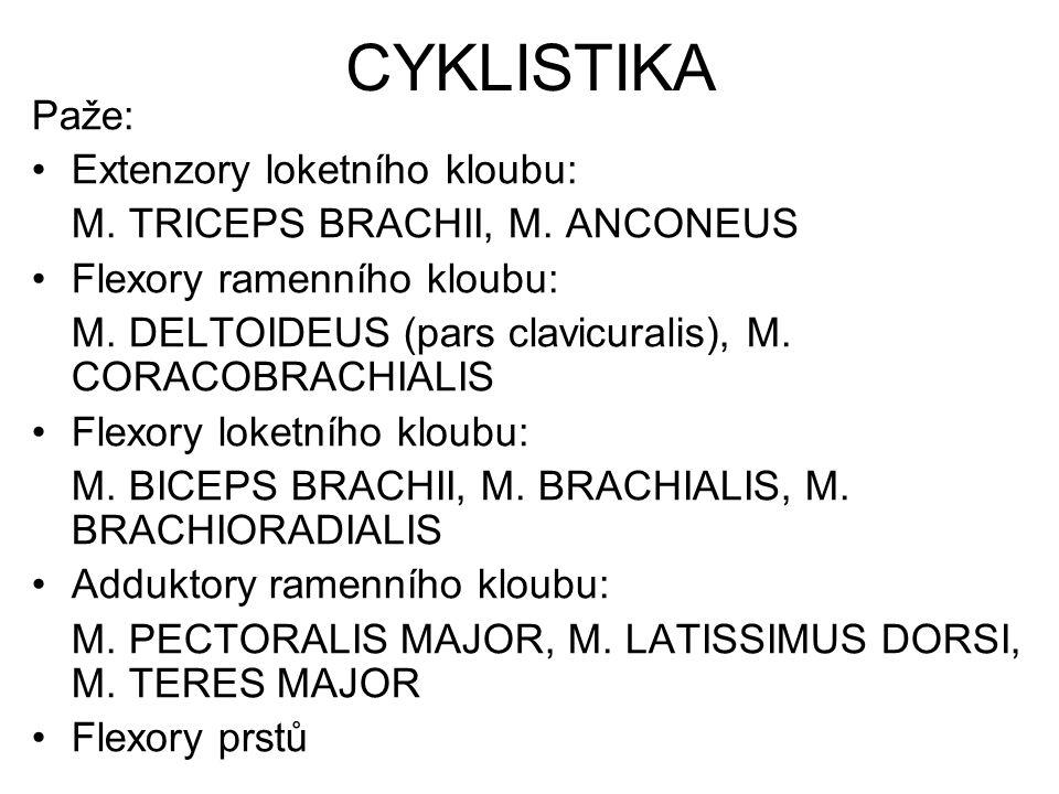CYKLISTIKA Paže: Extenzory loketního kloubu: M. TRICEPS BRACHII, M. ANCONEUS Flexory ramenního kloubu: M. DELTOIDEUS (pars clavicuralis), M. CORACOBRA