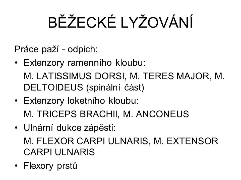BĚŽECKÉ LYŽOVÁNÍ Práce paží - odpich: Extenzory ramenního kloubu: M. LATISSIMUS DORSI, M. TERES MAJOR, M. DELTOIDEUS (spinální část) Extenzory loketní