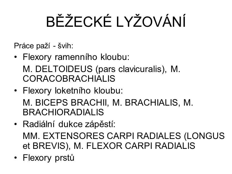 BĚŽECKÉ LYŽOVÁNÍ Práce paží - švih: Flexory ramenního kloubu: M. DELTOIDEUS (pars clavicuralis), M. CORACOBRACHIALIS Flexory loketního kloubu: M. BICE