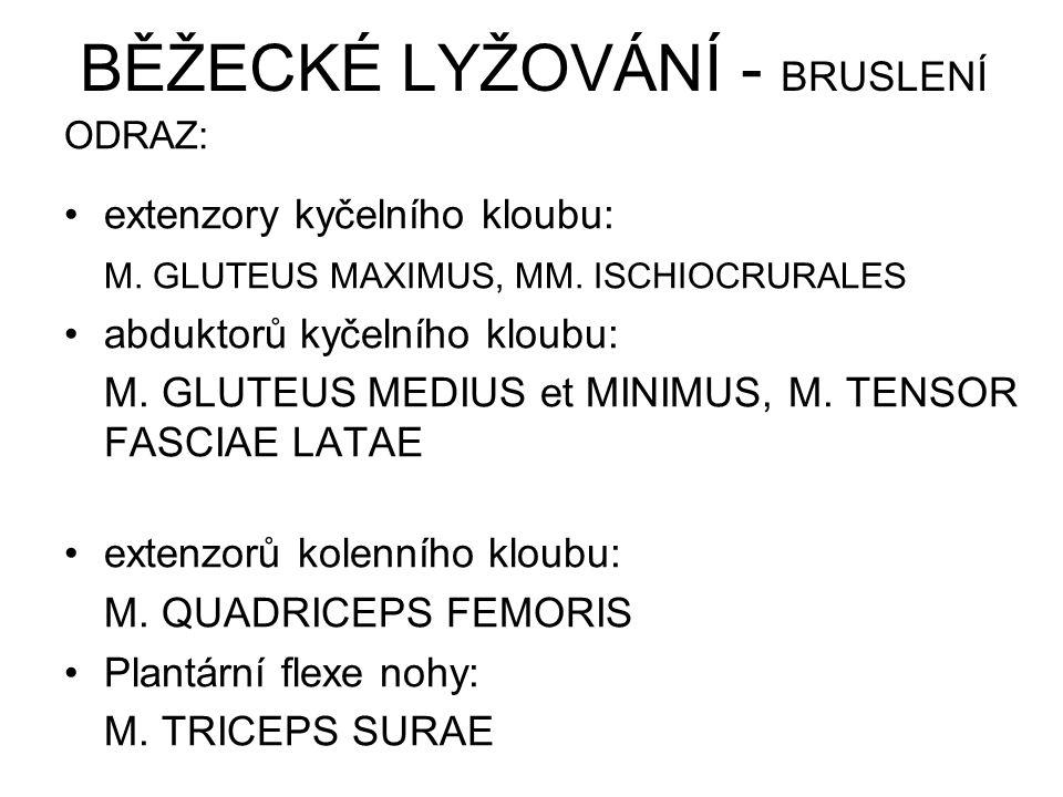 BĚŽECKÉ LYŽOVÁNÍ - BRUSLENÍ ODRAZ: extenzory kyčelního kloubu: M. GLUTEUS MAXIMUS, MM. ISCHIOCRURALES abduktorů kyčelního kloubu: M. GLUTEUS MEDIUS et