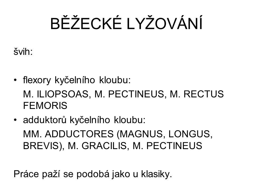 BĚŽECKÉ LYŽOVÁNÍ švih: flexory kyčelního kloubu: M. ILIOPSOAS, M. PECTINEUS, M. RECTUS FEMORIS adduktorů kyčelního kloubu: MM. ADDUCTORES (MAGNUS, LON