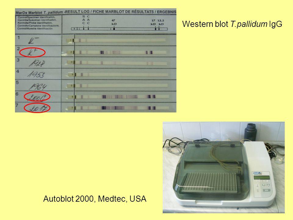 Western blot T.pallidum IgG Autoblot 2000, Medtec, USA