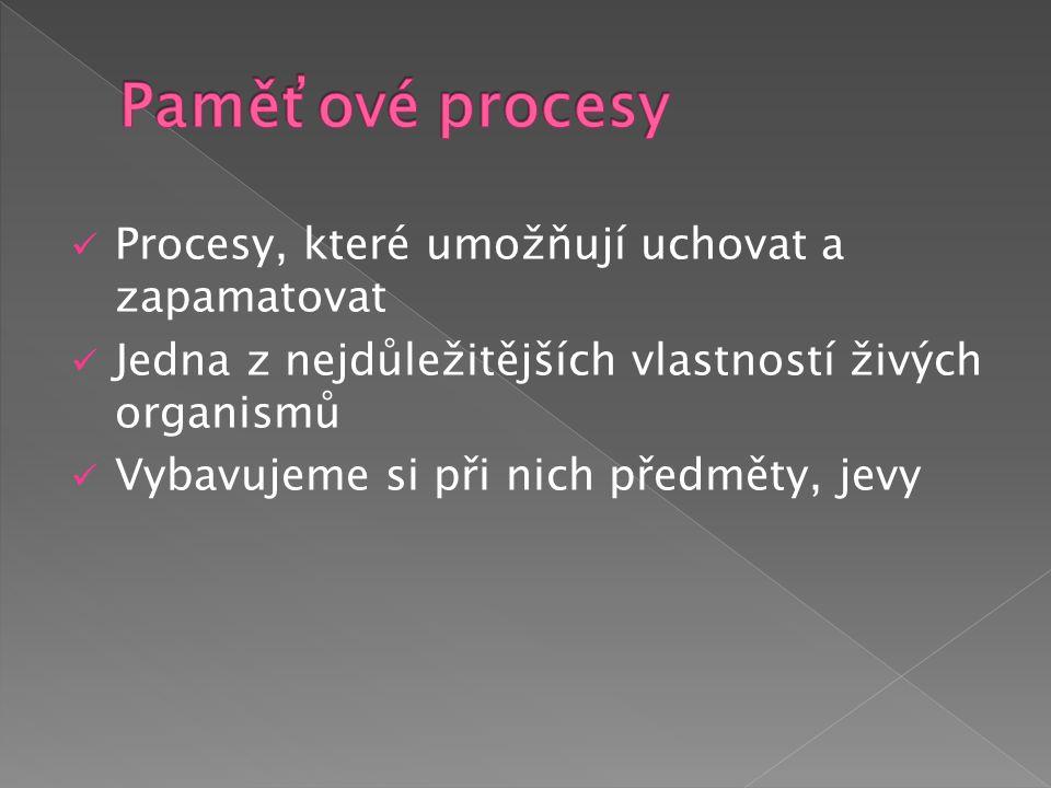 1) Zapamatování (kódování) záměrné x bezděčné 2) Uchování (retence) 3) Vybavení (reprodukce) záměrné x bezděčné znovupoznání = informaci si nedokážeme vybavit, ale dokážeme ji vybrat mezi jinými