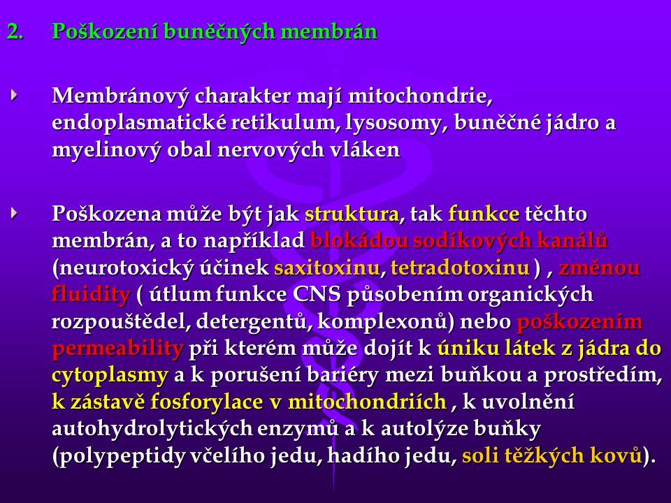 2.Poškození buněčných membrán Membránový charakter mají mitochondrie, endoplasmatické retikulum, lysosomy, buněčné jádro a myelinový obal nervových vl