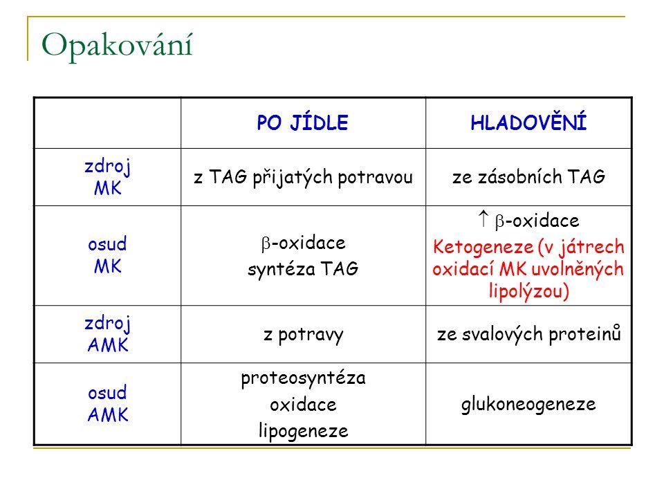 Opakování PO JÍDLEHLADOVĚNÍ zdroj MK z TAG přijatých potravouze zásobních TAG osud MK  -oxidace syntéza TAG   -oxidace Ketogeneze (v játrech oxidac