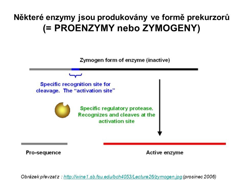 Některé enzymy jsou produkovány ve formě prekurzorů (= PROENZYMY nebo ZYMOGENY) Obrázek převzat z : http://wine1.sb.fsu.edu/bch4053/Lecture26/zymogen.