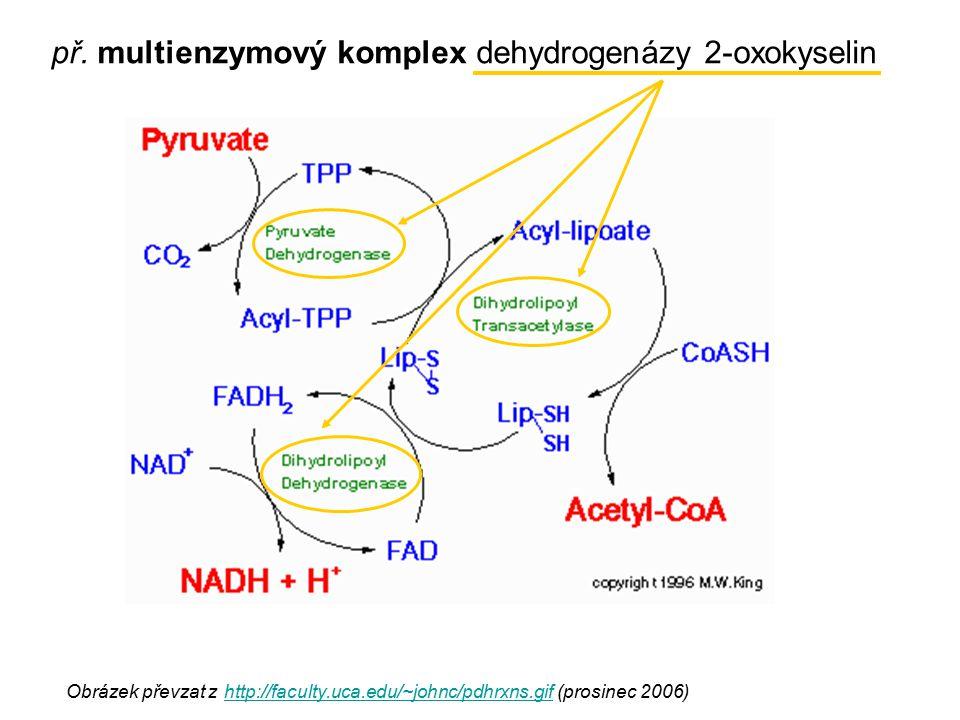 Obrázek převzat z http://faculty.uca.edu/~johnc/pdhrxns.gif (prosinec 2006) http://faculty.uca.edu/~johnc/pdhrxns.gif př. multienzymový komplex dehydr