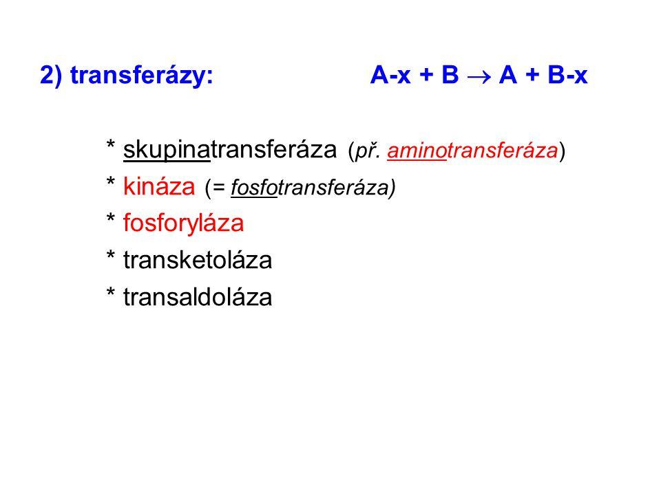 2) transferázy:A-x + B  A + B-x * skupinatransferáza (př. aminotransferáza) * kináza (= fosfotransferáza) * fosforyláza * transketoláza * transaldolá