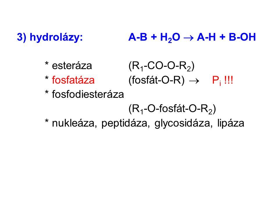 3) hydrolázy:A-B + H 2 O  A-H + B-OH * esteráza (R 1 -CO-O-R 2 ) * fosfatáza (fosfát-O-R)  P i !!! * fosfodiesteráza (R 1 -O-fosfát-O-R 2 ) * nukleá