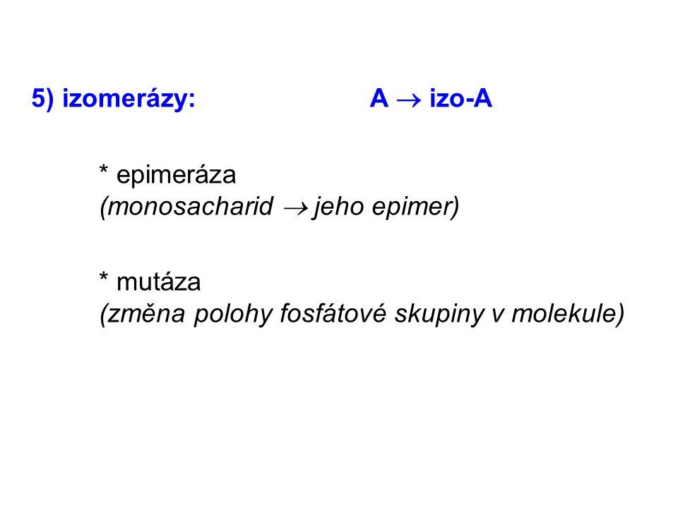 5) izomerázy:A  izo-A * epimeráza (monosacharid  jeho epimer) * mutáza (změna polohy fosfátové skupiny v molekule)