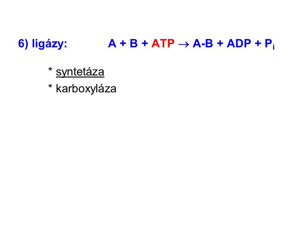 6) ligázy:A + B + ATP  A-B + ADP + P i * syntetáza * karboxyláza