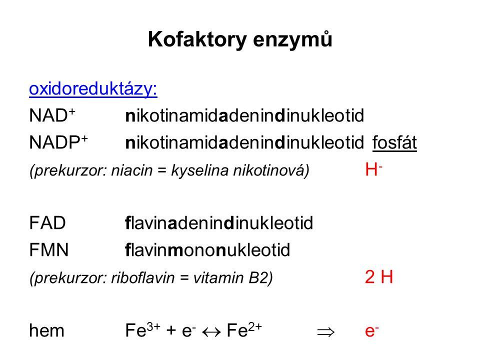 Kofaktory enzymů oxidoreduktázy: NAD + nikotinamidadenindinukleotid NADP + nikotinamidadenindinukleotid fosfát (prekurzor: niacin = kyselina nikotinov