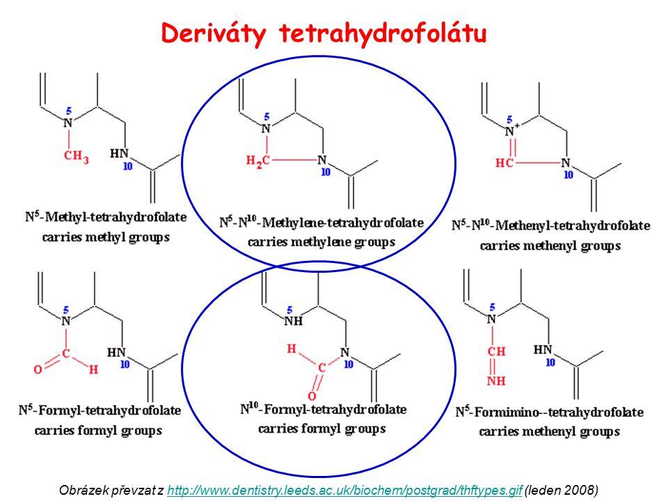 Obrázek převzat z http://www.dentistry.leeds.ac.uk/biochem/postgrad/thftypes.gif (leden 2008)http://www.dentistry.leeds.ac.uk/biochem/postgrad/thftype