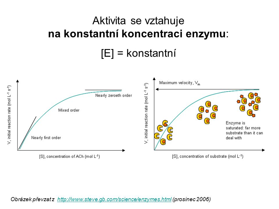 Obrázek převzat z http://www.steve.gb.com/science/enzymes.html (prosinec 2006)http://www.steve.gb.com/science/enzymes.html Aktivita se vztahuje na kon