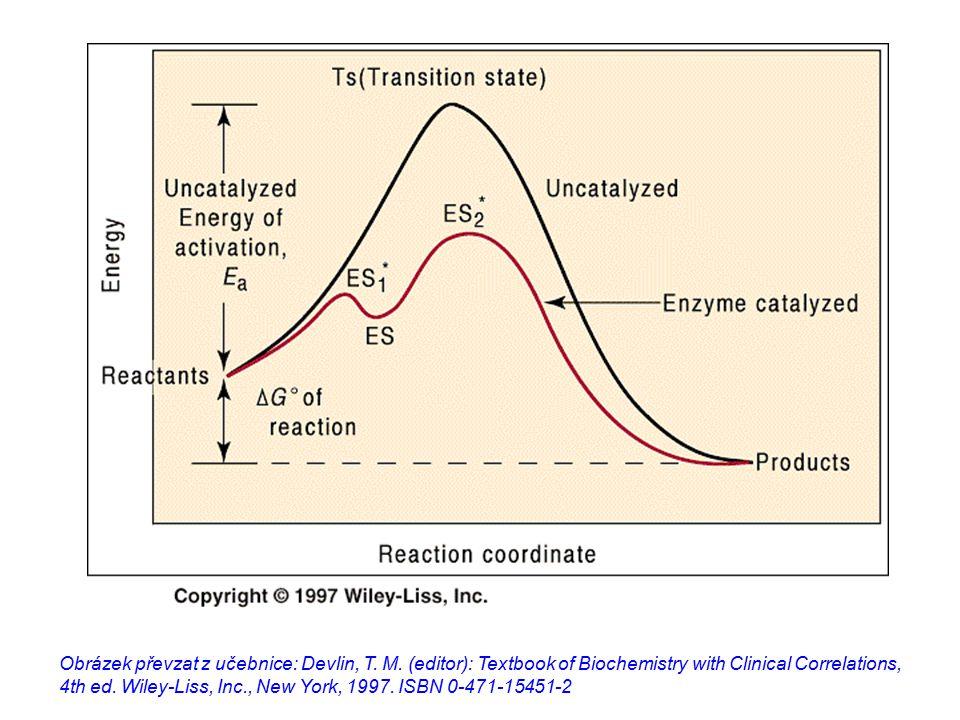 Enzymy snižují aktivační energii reakce (E A ) zkracují čas dosažení rovnovážných koncentrací se nespotřebovávají, z reakce vycházejí nezměněny umožňují uskutečnění reakce při T, p a pH lidského těla jsou specifické mohou být regulovány nemění  G dané reakce nemění rovnovážné koncentrace samostudium