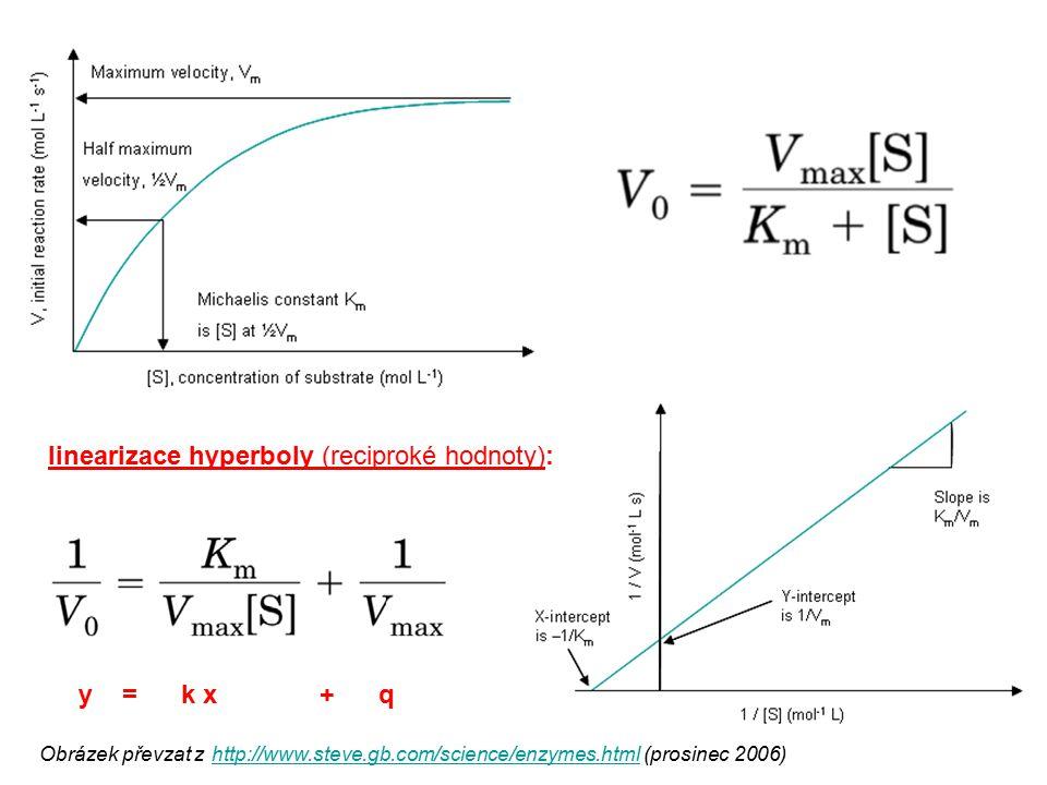 Obrázek převzat z http://www.steve.gb.com/science/enzymes.html (prosinec 2006) http://www.steve.gb.com/science/enzymes.html linearizace hyperboly (rec