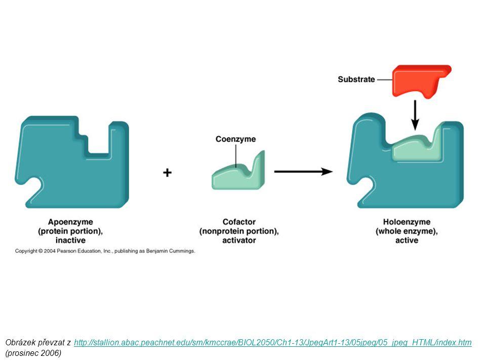 Kinetika Michaelis-Mentenové průběh křivky (hyperboly) může být popsán rovnicí: Obrázek převzat z http://www.steve.gb.com/science/enzymes.html (prosinec 2006)http://www.steve.gb.com/science/enzymes.html