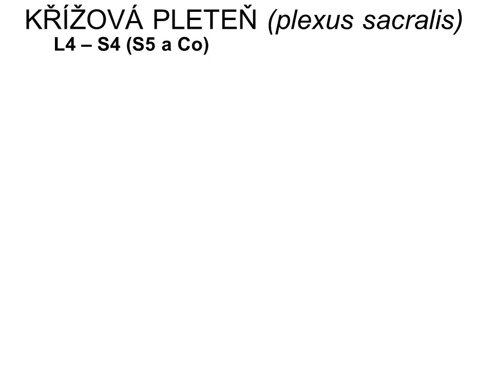 KŘÍŽOVÁ PLETEŇ (plexus sacralis) L4 – S4 (S5 a Co)