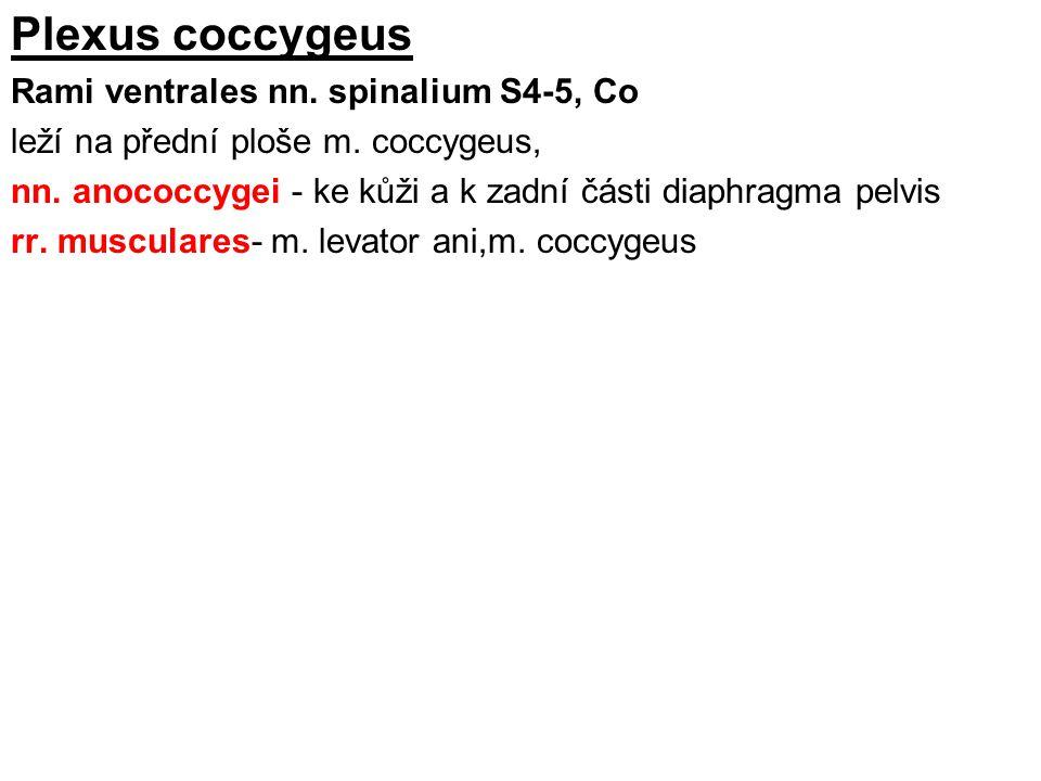 Plexus coccygeus Rami ventrales nn. spinalium S4-5, Co leží na přední ploše m. coccygeus, nn. anococcygei - ke kůži a k zadní části diaphragma pelvis