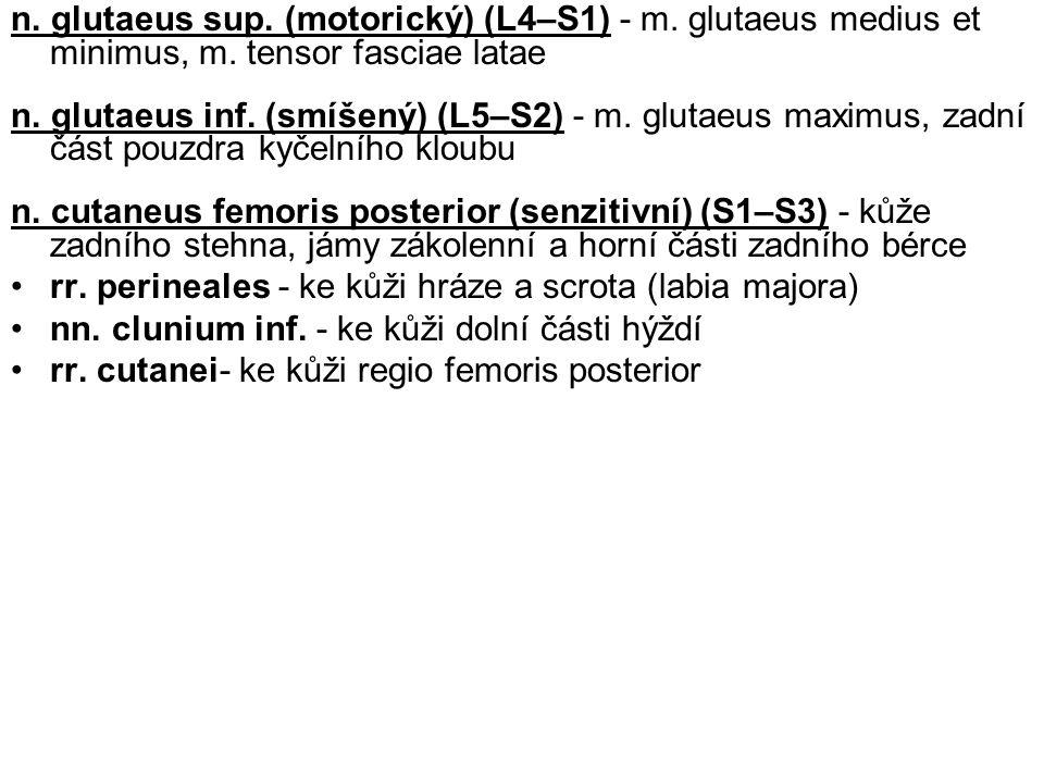 n. glutaeus sup. (motorický) (L4–S1) - m. glutaeus medius et minimus, m. tensor fasciae latae n. glutaeus inf. (smíšený) (L5–S2) - m. glutaeus maximus