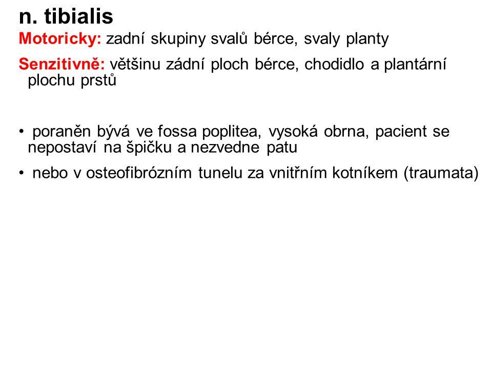 n.peronaeus communis (L4–S2 ) rr. articulares n.
