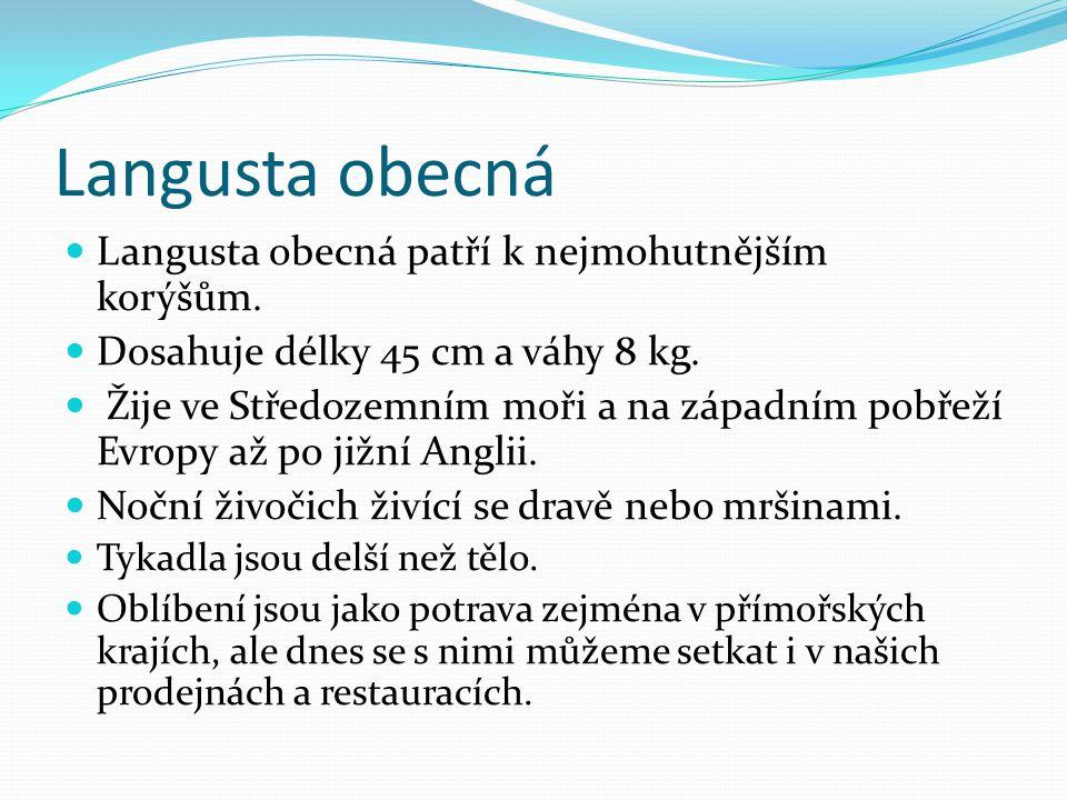 Langusta obecná Langusta obecná patří k nejmohutnějším korýšům. Dosahuje délky 45 cm a váhy 8 kg. Žije ve Středozemním moři a na západním pobřeží Evro
