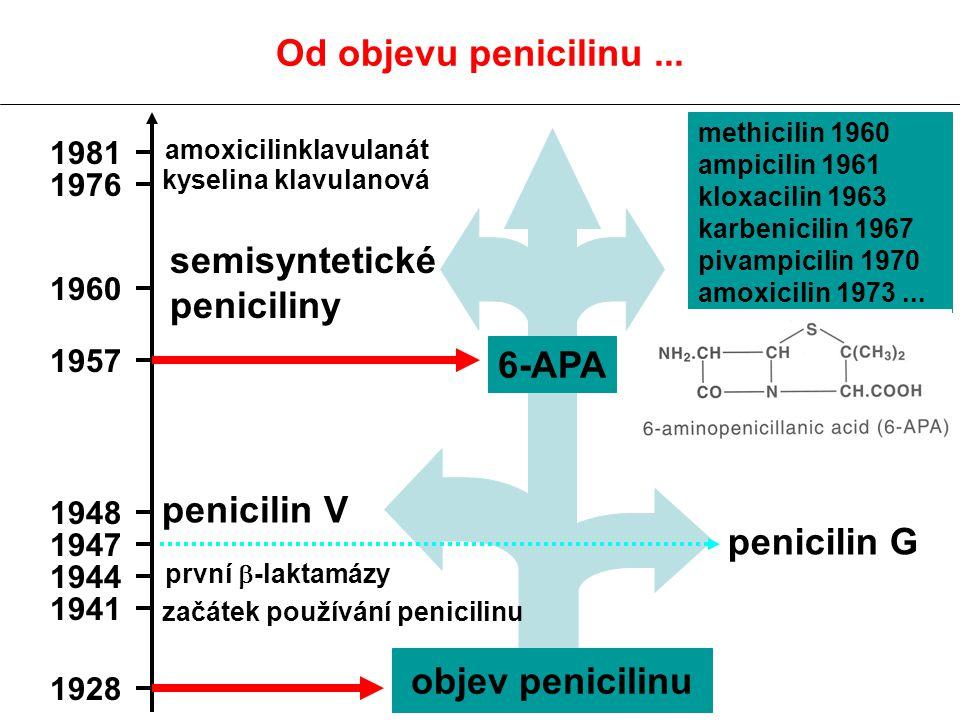 Peniciliny Mechanismus účinku: inhibice tvorby buněčné stěny - vazba na PBP (penicilin binding protein, což jsou nosiči enzymů transpeptidázy, transglykosidázy a karboxypeptidázy, které jsou zodpovědné za syntézu peptidoglykanu (součást bakteriální stěny), vazba na PBP irreverzibilní, účinek baktericidní Nejpoužívanější antibiotika, baktericidní, rychlý nástup účinku, krátký postantibiotický efekt, netoxická