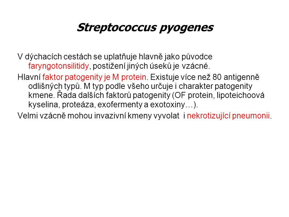 Streptococcus pneumoniae Pneumokoková infekce se v průběhu 120 let nesmírně změnila, aniž známe dobře příčiny.