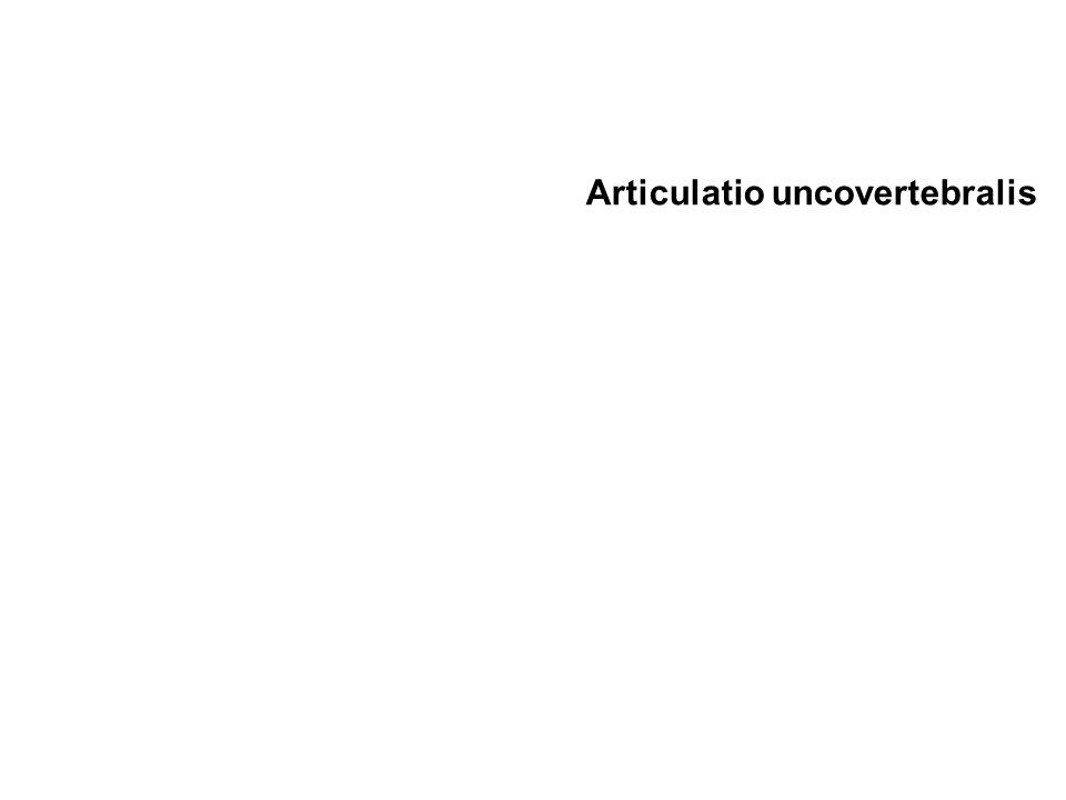 Articulatio uncovertebralis