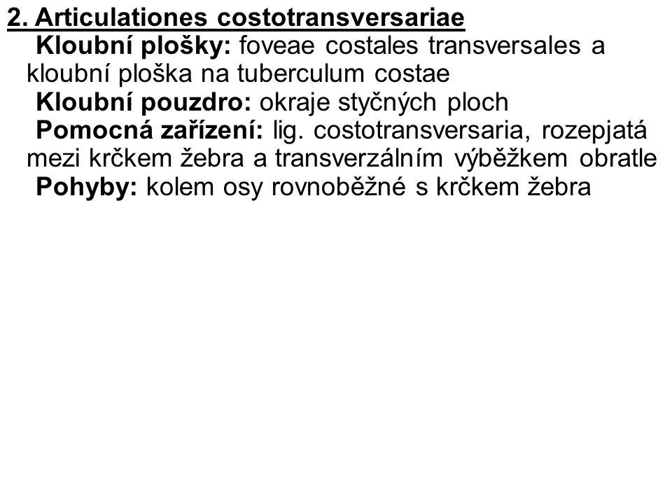 2. Articulationes costotransversariae Kloubní plošky: foveae costales transversales a kloubní ploška na tuberculum costae Kloubní pouzdro: okraje styč