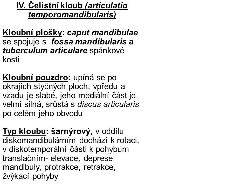 IV. Čelistní kloub (articulatio temporomandibularis) Kloubní plošky: caput mandibulae se spojuje s fossa mandibularis a tuberculum articulare spánkové