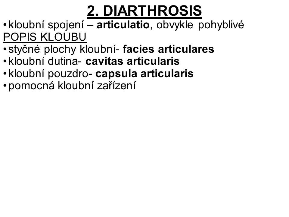 2. DIARTHROSIS kloubní spojení – articulatio, obvykle pohyblivé POPIS KLOUBU styčné plochy kloubní- facies articulares kloubní dutina- cavitas articul