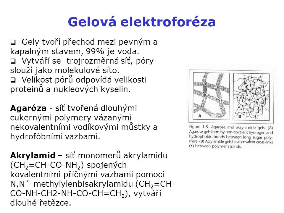  Gely tvoří přechod mezi pevným a kapalným stavem, 99% je voda.  Vytváří se trojrozměrná síť, póry slouží jako molekulové síto.  Velikost pórů odpo