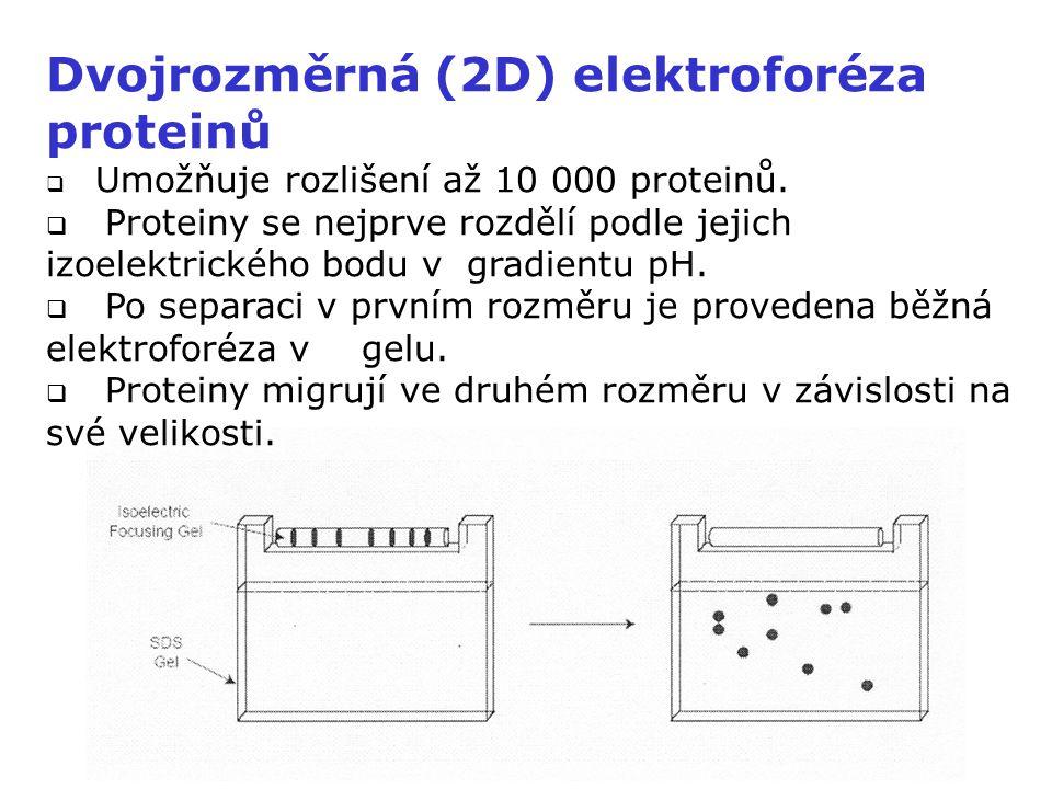 Dvojrozměrná (2D) elektroforéza proteinů  Umožňuje rozlišení až 10 000 proteinů.  Proteiny se nejprve rozdělí podle jejich izoelektrického bodu v gr