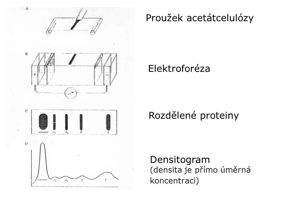 Proužek acetátcelulózy Elektroforéza Rozdělené proteiny Densitogram (densita je přímo úměrná koncentraci)