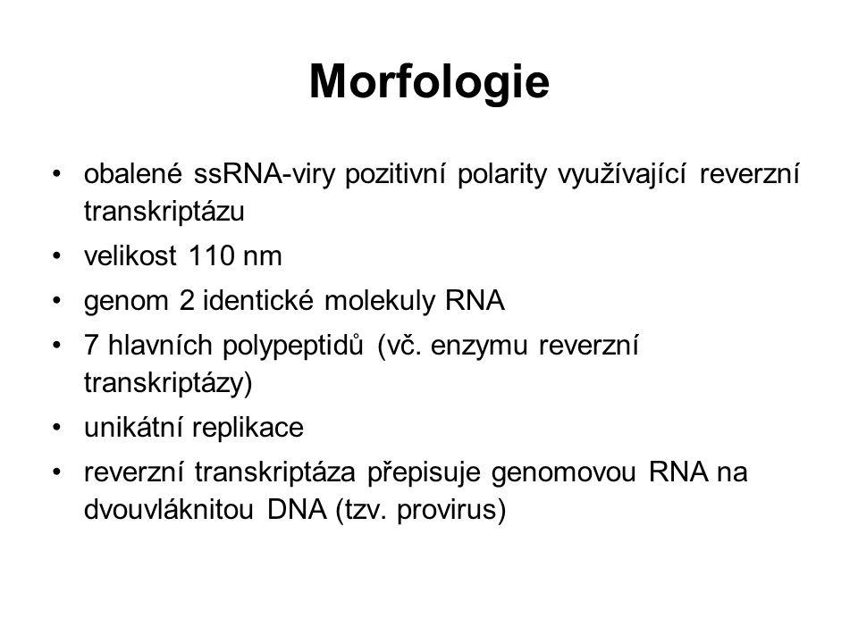 Morfologie obalené ssRNA-viry pozitivní polarity využívající reverzní transkriptázu velikost 110 nm genom 2 identické molekuly RNA 7 hlavních polypept