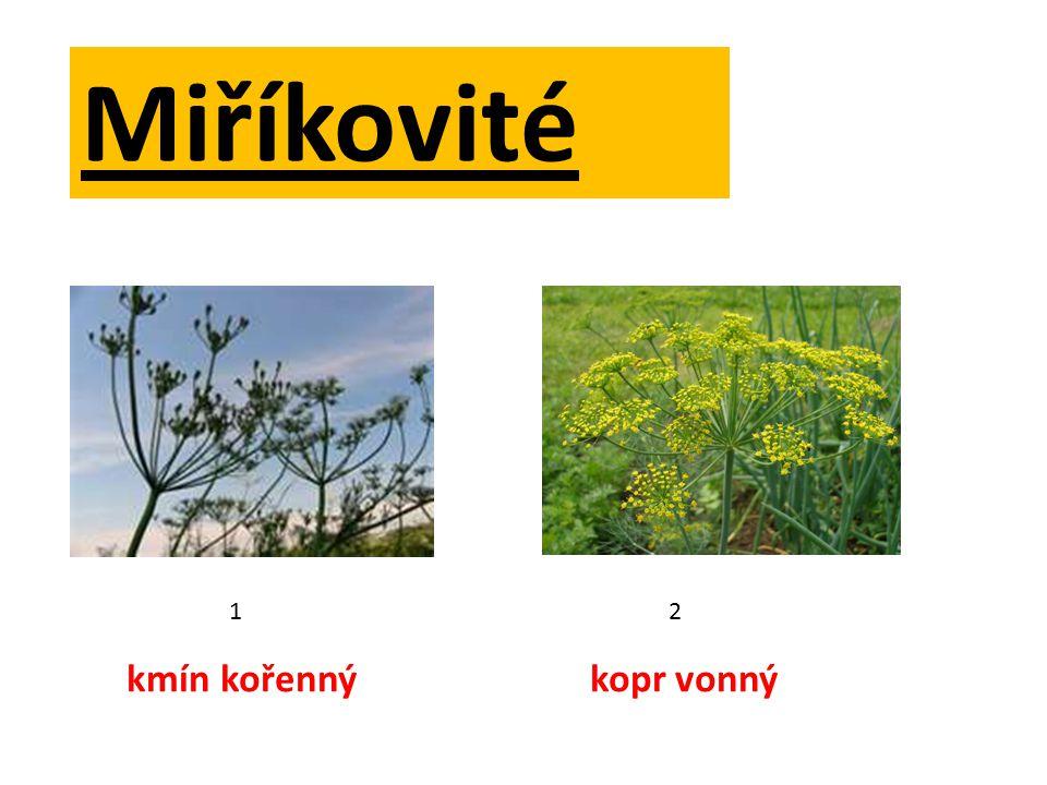 Charakteristické znaky Rostlinybyliny, často dvouleté Obsahujívonné látky - silice Kořeny silné, vytrvalé nebo bulvy Květy drobné 5 četné Květenství okolík, složený okolík Plodydvounažky