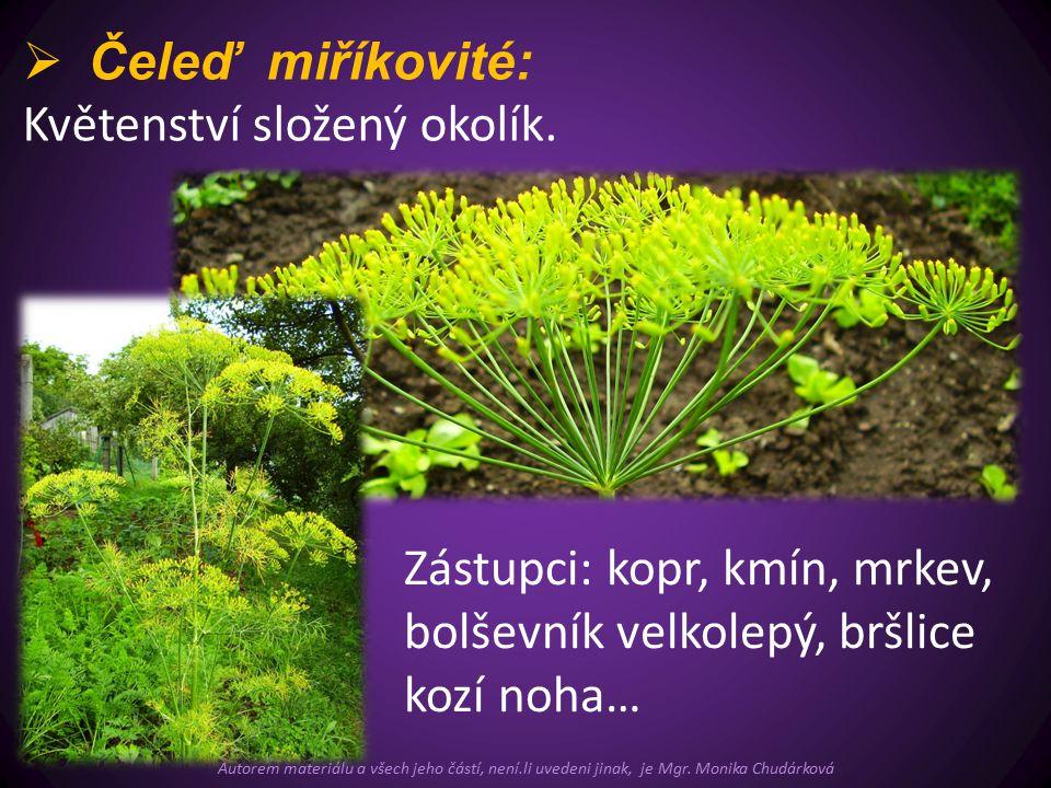  Čeleď miříkovité: Květenství složený okolík.