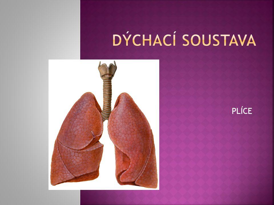  - musíme dýchat a zásobovat tělo kyslíkem  - zároveň se musíme zbavovat oxidu uhličitého  - než se vzduch dostane do plic projde dýchacími cestami, zahřeje se a zvlhčí Kdo naopak přijímá oxid uhličitý a vydává kyslík.