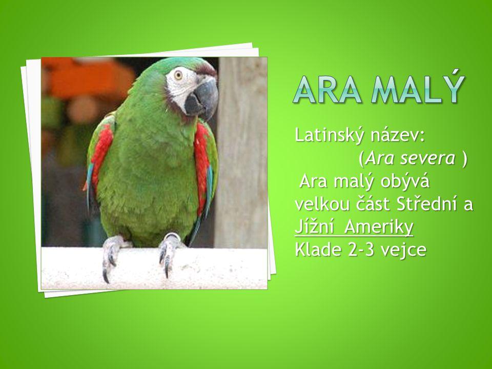 Latinský název: (Ara severa ) (Ara severa ) Ara malý obývá velkou část Střední a Jížní Ameriky Ara malý obývá velkou část Střední a Jížní Ameriky Klade 2-3 vejce
